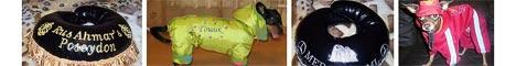 Одежда для собак на заказ в студии «Догги Старз»...