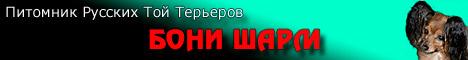 Питомник русских той-терьеров БОНИ ШАРМ