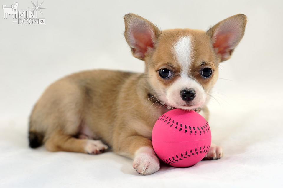 щеночек с мячиком картинки