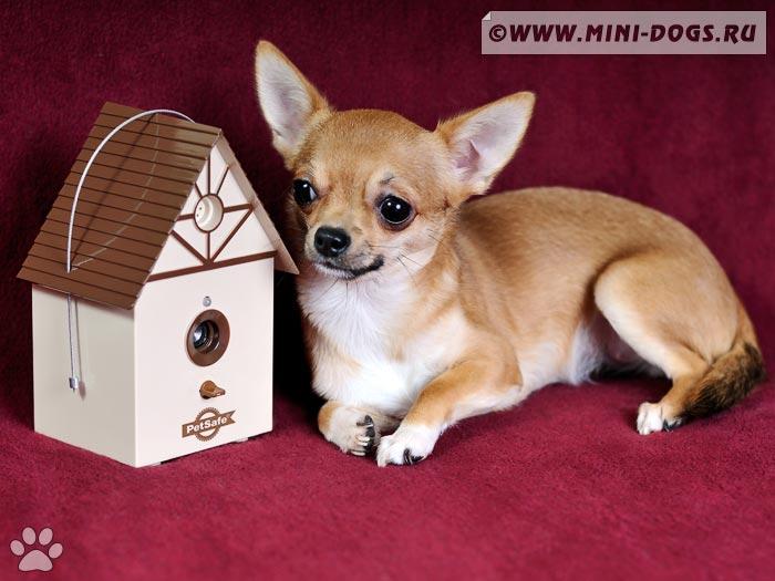Ошейник от лая для собак: польза или …? - VashiPitomcy ru