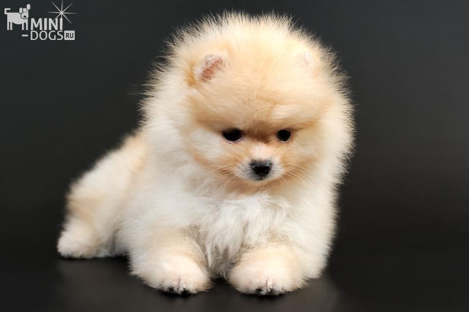 собак которые не растут