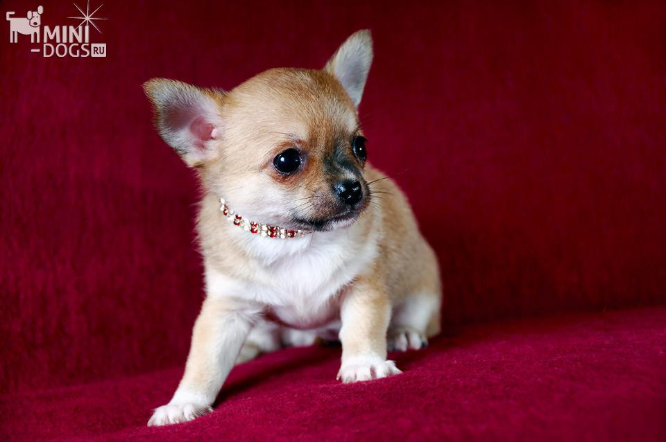 отдыха картинки с карманами собаками супы всегда