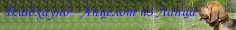 Персональная страница бладхаунда по кличке Анцелот...