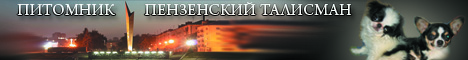 Питомник чихуахуа и японских хинов «Пензенский Талисман»